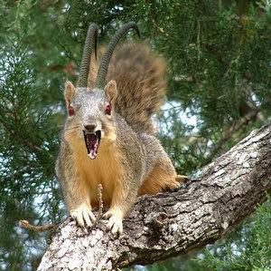 Horned Monster Squirrel