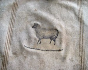 primitive sheep