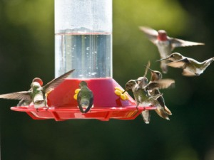clear nectar, red feeder