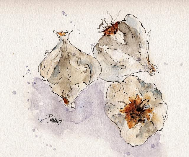 One garlic; three views